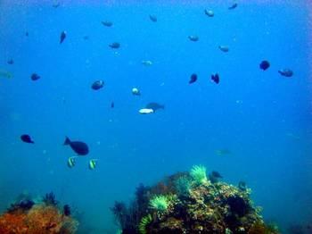 Real_aquarium